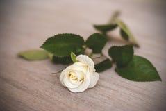 White rose on the table, cream rose, vignette stock images