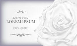 White Rose with text on a card or invitation. Vector illustratio Stock Photos