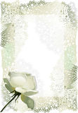 White rose (vector) Royalty Free Stock Photography