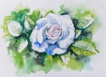 White rose watercolors painted Stock Images