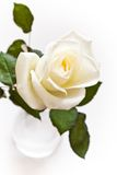 White rose with waterdrops. White rose in vase with water-drops royalty free stock images