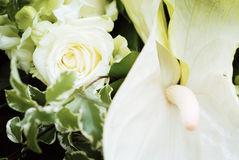 White rose in wedding bouquet Stock Photos