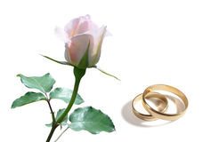 White rose and wedding rings. On a white background Stock Photography