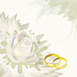 White rose and wedding rings Stock Photos