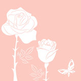 White  rose and white butterfly. Postcart with white  rose and white butterfly Royalty Free Stock Photo