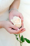 White rose in woman`s hands. Delicate flower in the hands of young girl dressed white dress stock image