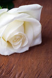 White rose, on wooden background. Stock Photography