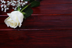 White rose on wooden background Stock Image