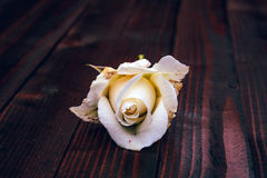 White Rose on Wooden Background. Selective Focus Royalty Free Stock Photos
