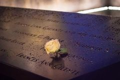 White rose at 911 World Trade Center Memorial site. New York, USA, october 2017: A white rose at 911 World Trade Center memorial on a rainy night. White rose is Stock Images