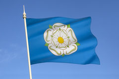 White Rose of Yorkshire - United Kingdom Royalty Free Stock Image