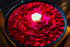 White roser with red rose petals in the bowl in Balinese SPA sal Stock Image