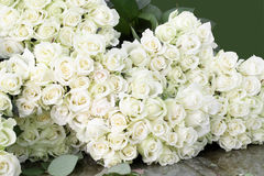White roses. Many fine and beautiful white roses Royalty Free Stock Photo