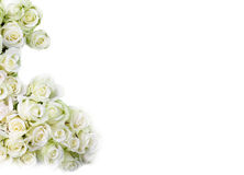 White roses. Many fine and beautiful white roses Royalty Free Stock Image