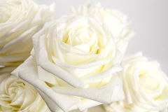 White roses. Close up with a bouquet of white roses Stock Image