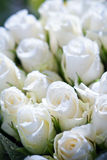 White roses. A background of a dozen white roses Royalty Free Stock Image