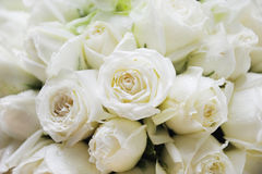 White roses. Many beautiful white roses background Stock Photos