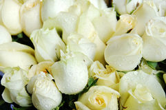 White roses. Close up of a bouquet of white roses royalty free stock photography