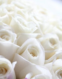 White roses. Whit roses in a wedding Royalty Free Stock Photography