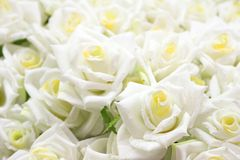 White roses. Close-up of white roses stock photos