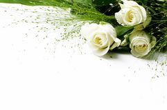 White roses. Over white background - perfect isolated for your text Stock Images