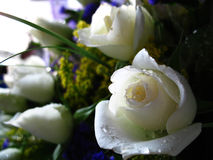 White Roses. A bouquet of white roses royalty free stock image