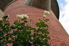 White Roses Along Brick Wall Royalty Free Stock Images
