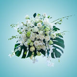 White roses arrangement on light blue background Stock Photo