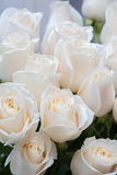 White roses as a floral background Royalty Free Stock Photo