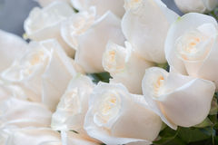 White roses as a floral background Stock Photos