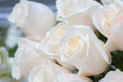 White roses as a floral background Stock Images