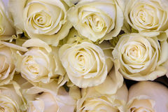 White Roses Background Royalty Free Stock Images