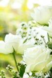 White roses background Stock Image