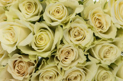 White roses background Stock Photo