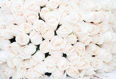 White roses background. Luxury bouquet Royalty Free Stock Image