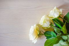 The white roses. stock photography