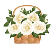 White roses in basket. Royalty Free Stock Photo