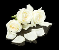 White roses on the black background Stock Image