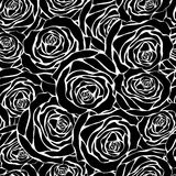 White roses on a black background Stock Photos