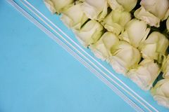 White roses on blue background royalty free stock photography
