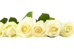 White roses. Bouquet of white roses  on white Royalty Free Stock Photos