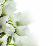 White roses bouquet Royalty Free Stock Photography