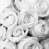 White roses. A bouquet of white and wet roses Royalty Free Stock Photography