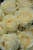 White roses in bridal bouquet. White roses in a bridal bouquet Royalty Free Stock Image