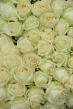 White roses in bridal bouquet. White roses in a elegant and classic wedding arrangement Stock Photo