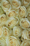 White roses in bridal bouquet. White roses in a elegant and classic wedding arrangement Stock Image