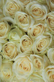 White roses in bridal bouquet. White roses in a elegant and classic wedding arrangement Royalty Free Stock Image