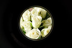 White roses in circular frame Royalty Free Stock Photo