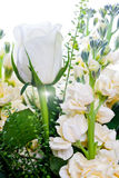 White roses close up Stock Photos