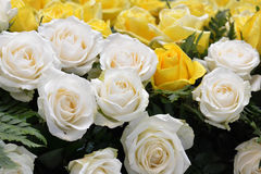 White roses Close up Stock Photo